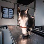 Paard paardenauto